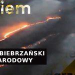 Wciąż płonie Biebrzański Park Narodowy! Ten pożar może potrwać nawet kilka miesięcy | Onet News - Onet News