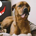 Śmieszne koty i psy zabawne zwierzęta Padniesz ze śmiechu funny #3