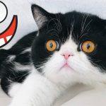 Śmieszne koty i psy zabawne zwierzęta Padniesz ze śmiechu funny #6