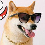 Śmieszne koty i psy zabawne zwierzęta Padniesz ze śmiechu funny #7