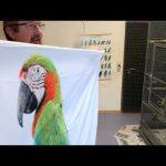 Pościel z papugą.