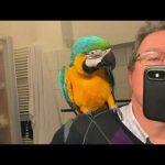 Reakcja papug na odbicie lustrzane.