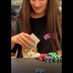Kot gra w Pokera!🃏😼Świętowanie Dwóch Milionów!🎉🎈 Wersow insta Story - Wersow Insta Story.