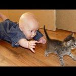 Śmieszne Koty I Dzieci Grają Razem - Cute Cat - Śmieszne koty