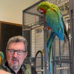 Ile kosztuje papuga Ara i dlaczego tak dużo?