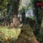 Najbardziej niesamowity zapomniany cmentarz - W środku lasu | Wietrzyk studio